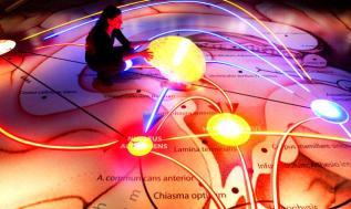 Le-notizie-scientifiche-piu-curiose-del-2012_h_partb